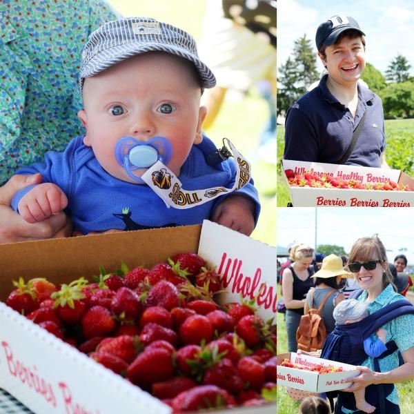 Strawberry Fest 4