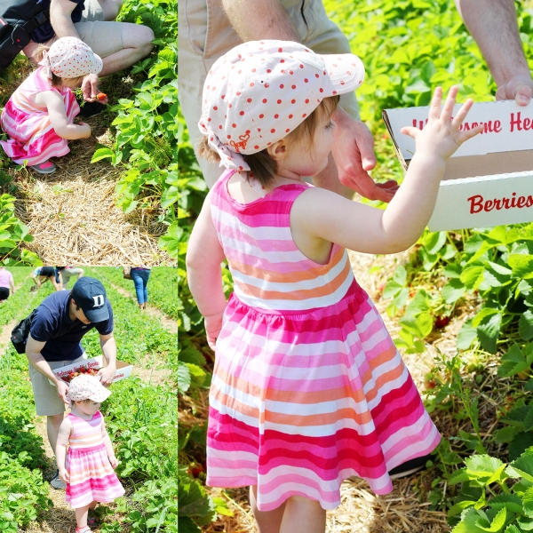 Strawberry Festival 2